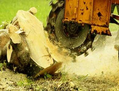 Full stump removal service in Pomona, California