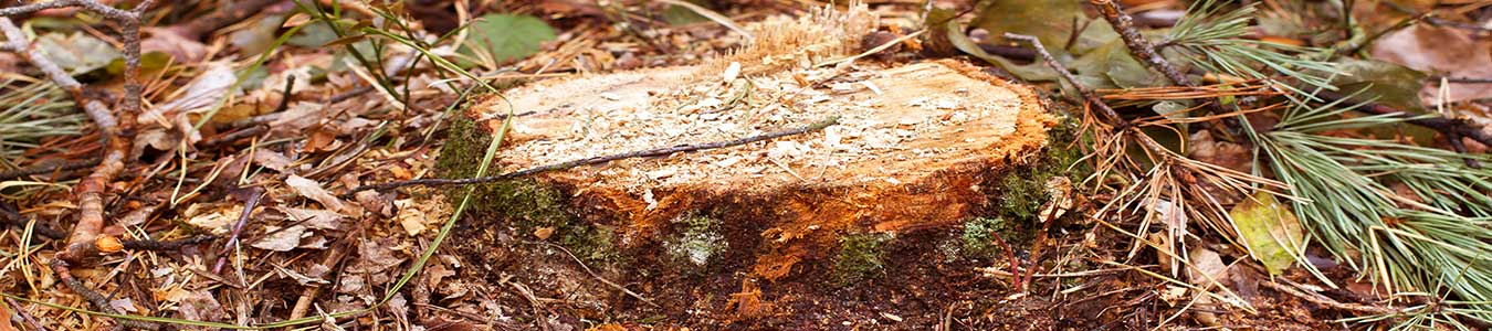 Tree Stump Removal Service in Pomona